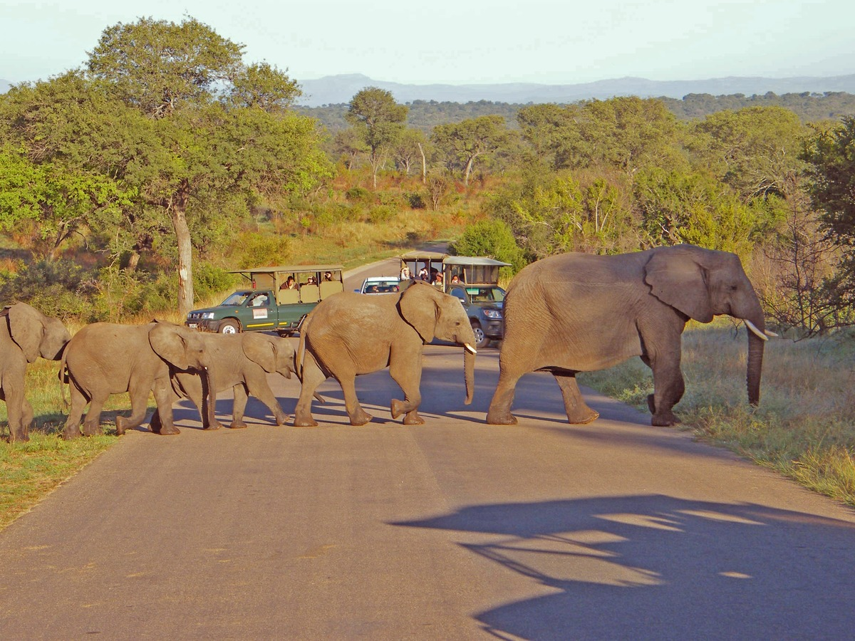 ElephantCrossing_CVO_3952_2